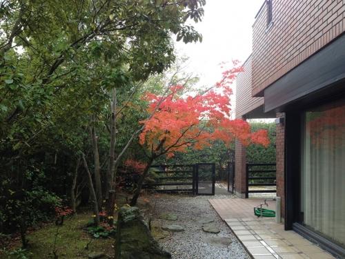 9月の紅葉