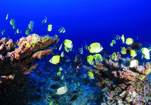 coral-reef-954057_640