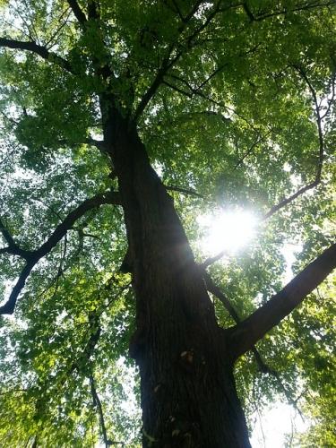 tree-351047_640