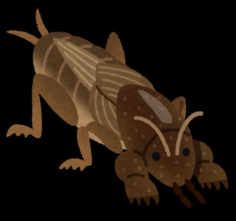 bug_okeara
